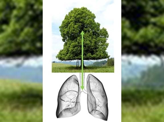 Die Stärkung des Immunsystems <br>und der Lunge